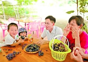 爸爸,我们去摘葡萄吧!