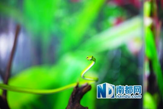 广州鳄鱼公园 湿地动物们的暑假嘉年华