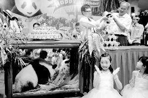 """长隆熊猫公主""""隆隆""""一岁啦!"""