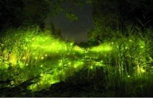 南湖游乐园 几千只萤火虫身边环绕美!