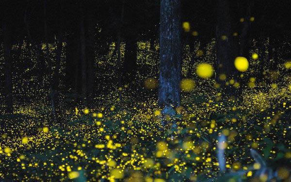南湖游乐园看萤火虫花园 萤火虫漫天飞舞