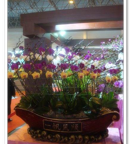 九里香盆景是园中最好的盆景