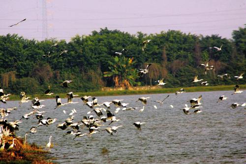 冬游何处去 南沙湿地观鸟正当时