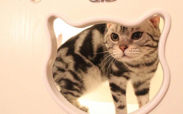 可爱猫爪比心图片