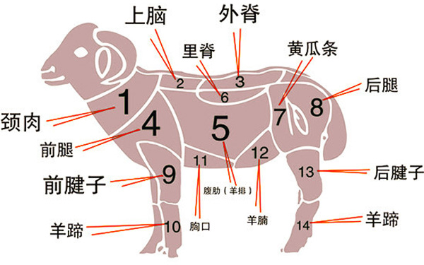喜气洋洋,羊肉各部位该怎么吃?