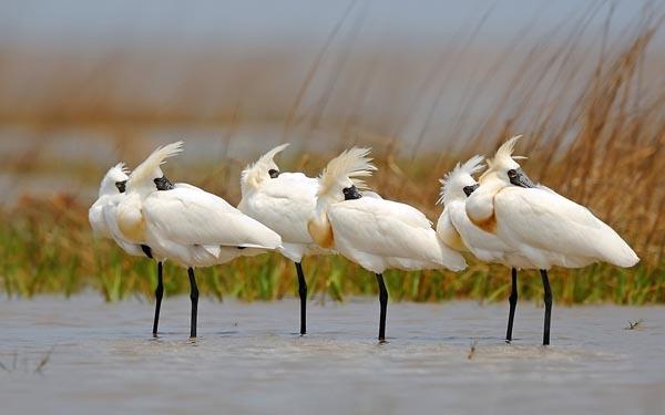 新年去南沙有乜玩?观鸟赏花血拼