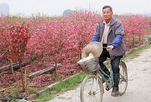 广州迎春花市何时有?