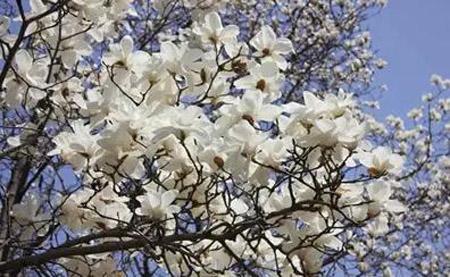 广州哪里赏花好