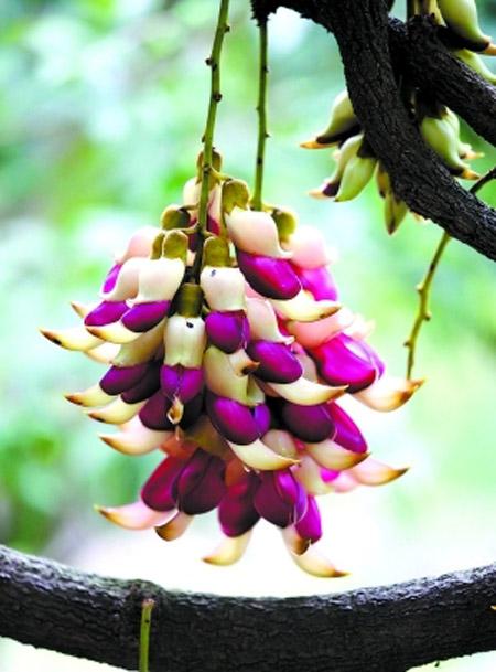 华南植物园赏花攻略