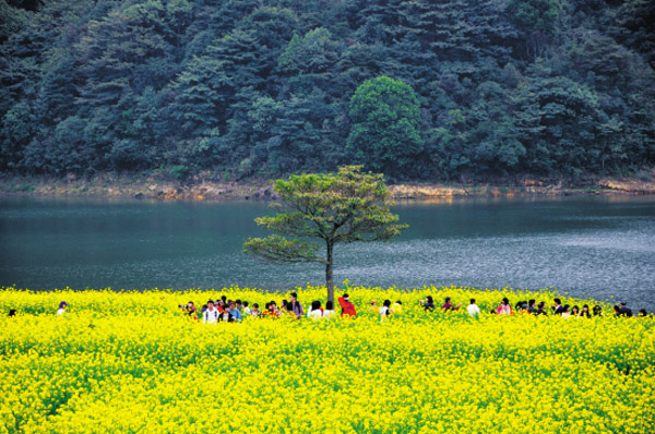 广州哪里有油菜花看