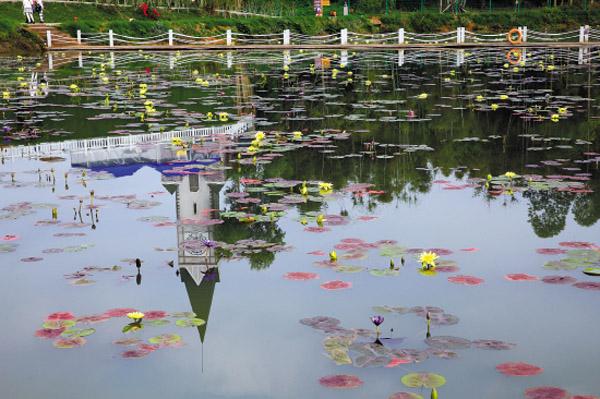广州周边赏花攻略,惠州三月赏花指南