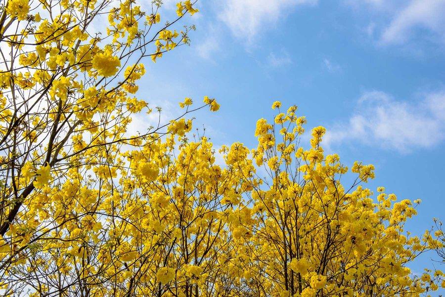 三月的广州的确很美