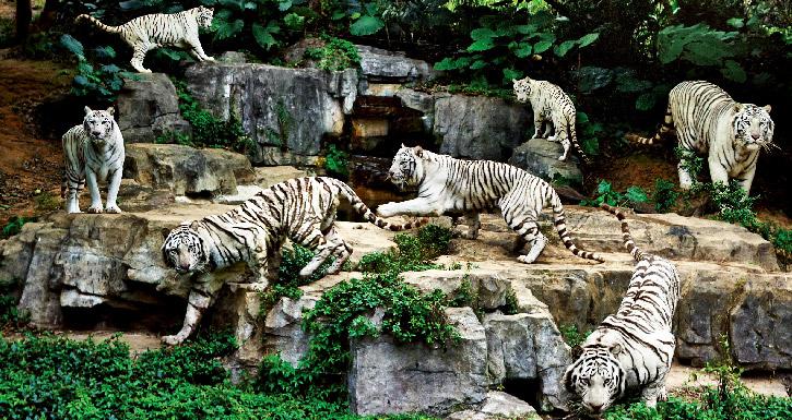 广州长隆野生动物园有什么好玩的