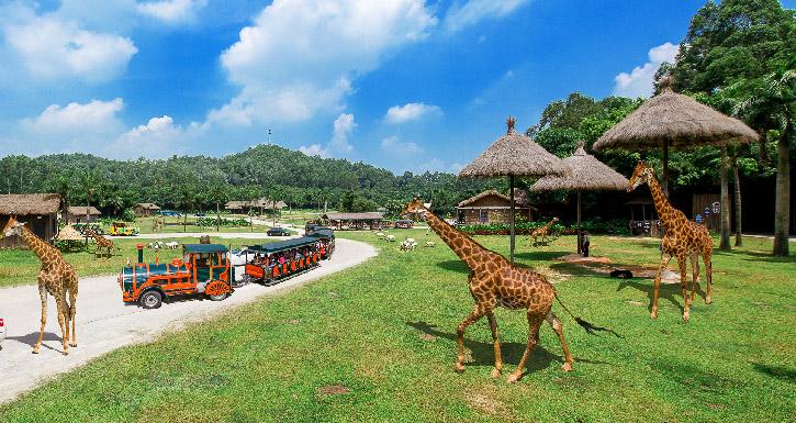 广州长隆野生动物园有什么好玩的?
