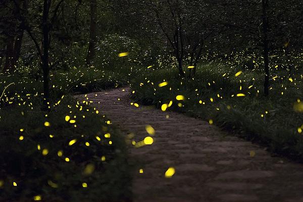 4天放飞10万萤火虫,是浪漫,还是屠杀?