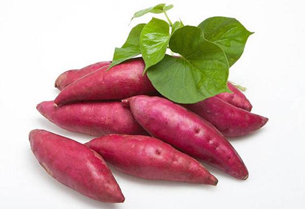 南沙红心甘薯:一种当年清末年间被作为贡品的农产品