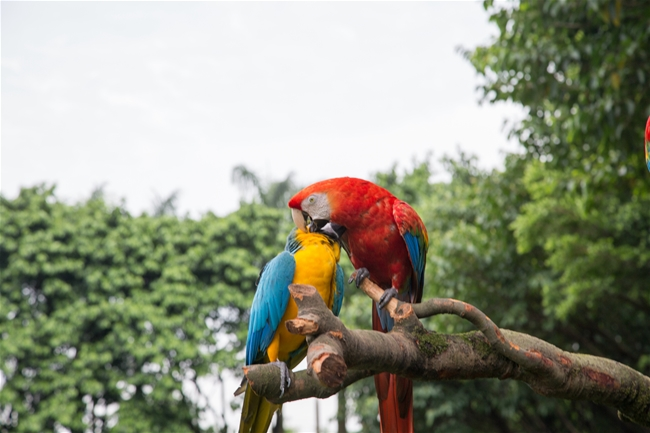 生态湿地公园广州鳄鱼公园7月起正式更名长隆飞鸟乐园