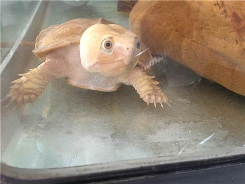 2016年中国(中山)国际龟鳖博览会9月23日开幕
