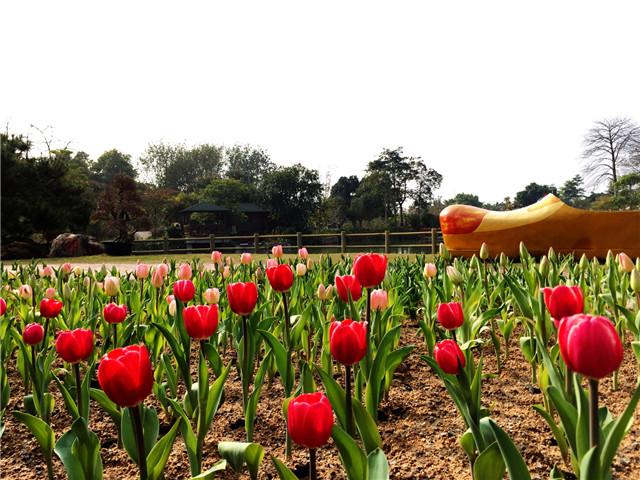 旅游资讯:广州从化宝趣玫瑰世界在哪里?