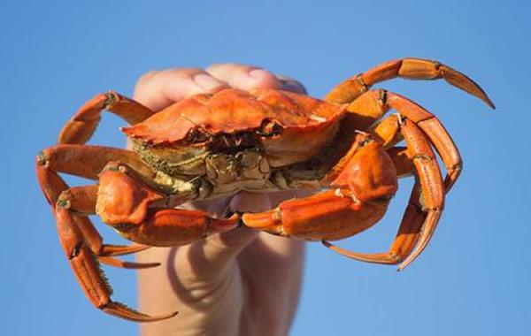 中秋赏月美食推荐:清蒸螃蟹