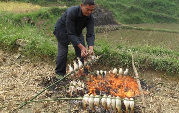 中秋广州周边游:到粤北品禾花鱼去