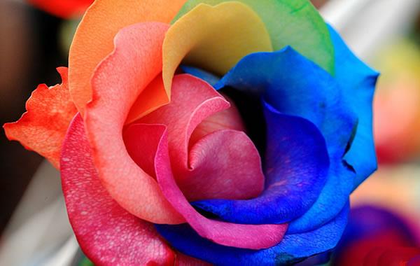 国庆情侣怎么过?到华南植物园看七彩玫瑰吧!