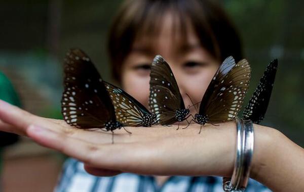 国庆度假到白云山参加第四届蝴蝶文化节