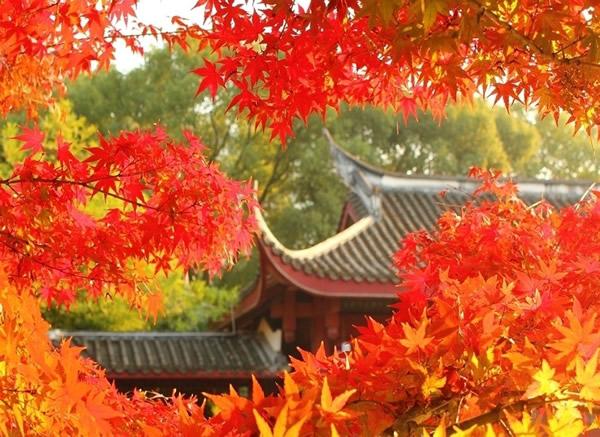 11月份去哪好?到西樵山看红叶舞秋山!
