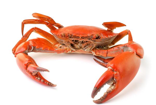 广州哪里的螃蟹好吃?