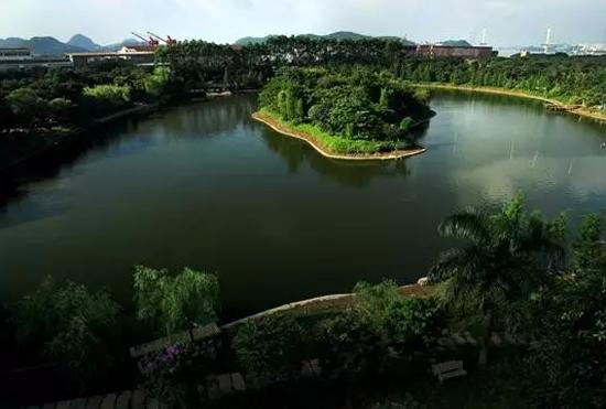 广州一日游到长洲岛赏水乡之美