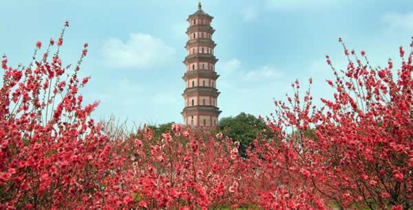 春节旅游到莲花山行桃花运