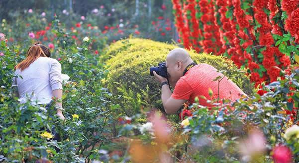 三八旅游到番禺百万葵园赏花吧!