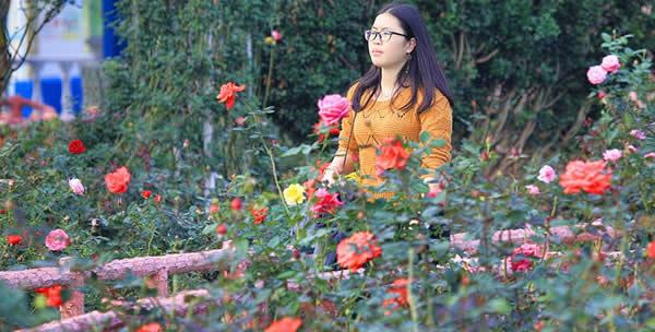 三月周末到番禺百万葵园赏花