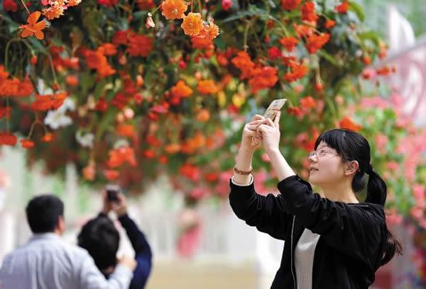 春季到广州南沙百万葵园赏花