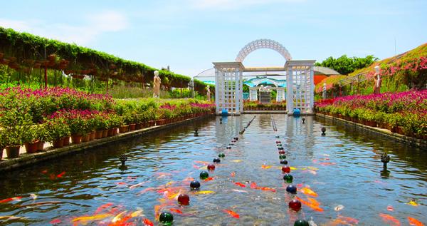 夏季旅游到番禺百万葵园赏花