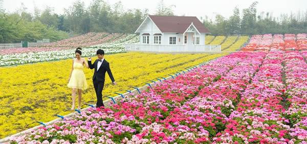 春季旅游到百万葵园听乐赏花!