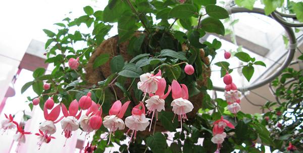 三八旅游到番禺百万葵园逛逛吧!