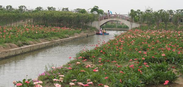 广州百万葵园亲子一日游攻略