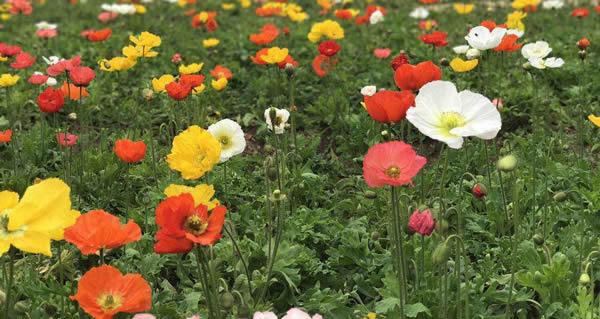 广州一日游百万葵园玩什么?