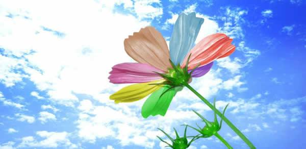 三月旅游到百万葵园欣赏七彩花