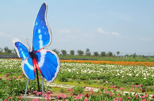 清明节到番禺百万葵园观赏蝴蝶飞舞