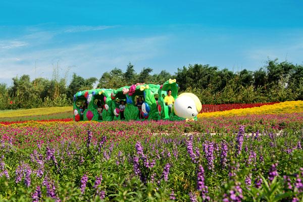 清明节约会到广州番禺百万葵园赏花!