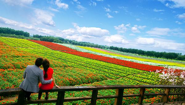 清明节小长假旅游到百万葵园赏花吧!