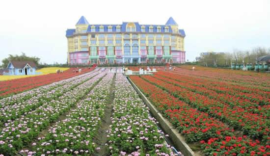 7月份适合去哪里旅游广州百万葵园情侣一日游攻略