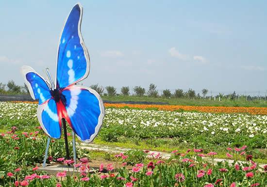 广州一日游热门景点番禺南沙百万葵园什么时候去好