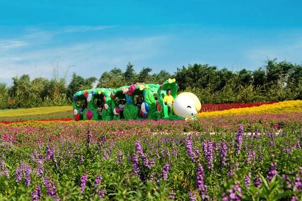 七月去哪里旅游最好 广州一日游景点百万葵园的花期