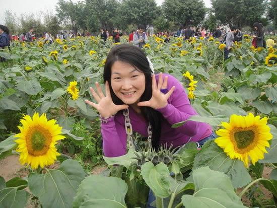 七月一日自驾游去哪里广州百万葵园旅游攻略