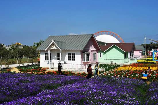 到广州百万葵园欣赏鲜花天空中漫天飞舞