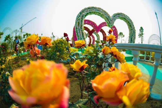 广州一日游到番禺百万葵园赏鲜花玩游戏
