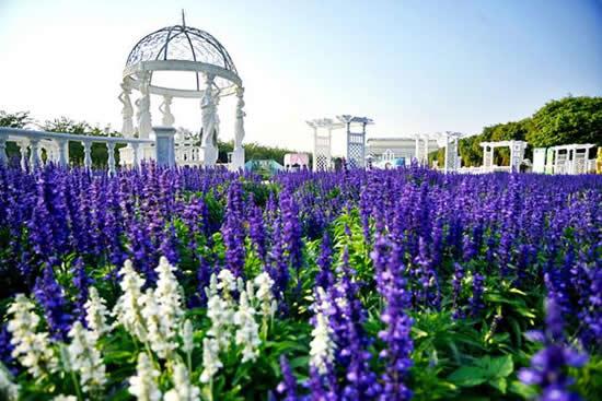 广州百万葵园:种植了100多万株葵花的赏花乐园